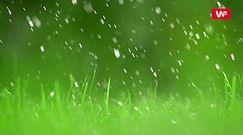 Prawidłowe podlewanie trawnika. Oto najczęściej popełniane błędy