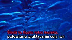 Śledź – ulubiona ryba Polaków. Co warto o nim wiedzieć?
