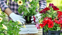 Mieszanki ziemi dla roślin. Jak wybrać odpowiednie podłoże?