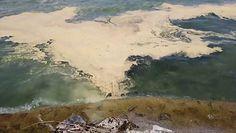 Żółta woda w Jeziorze Genewskim