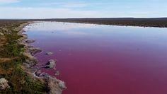 """Ekolodzy przerażeni różową laguną w Argentynie. """"Zabija wszelkiego rodzaju życie"""""""