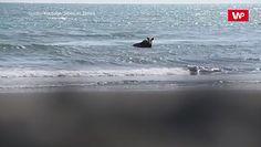 Przerwany relaks w oceanie. Niedźwiedź zaatakował bez wahania