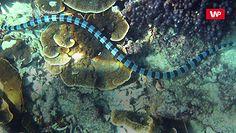 Niesamowity wąż. Trudno uwierzyć w to, co potrafi
