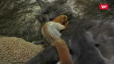 Kotka adoptowała wiewiórki. Niezwykła historia z Bakczysaraju