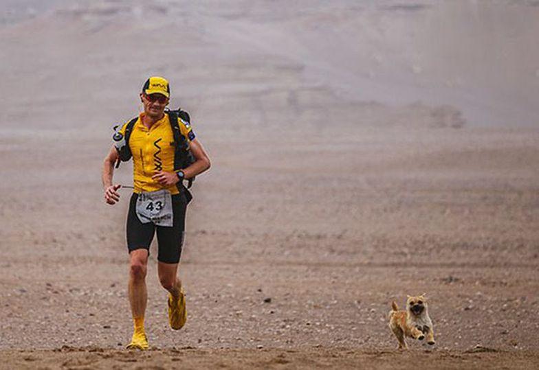 Bezdomna suczka biegła za maratończykiem... ponad 170 kilometrów przez pustynię