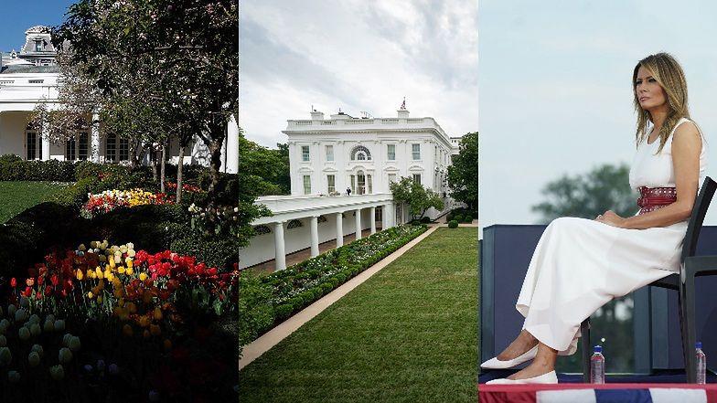 """Cała na biało Melania Trump w ogniu krytyki za... wycięcie czereśni przed Białym Domem: """"Zamieniłaś ogród w CMENTARZ"""" (ZDJĘCIA)"""