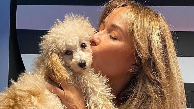 """TYLKO NA PUDELKU: Joanna Przetakiewicz odpiera zarzuty o kupowanie psów z PSEUDOHODOWLI: """"Spełniają wszystkie wymogi"""""""