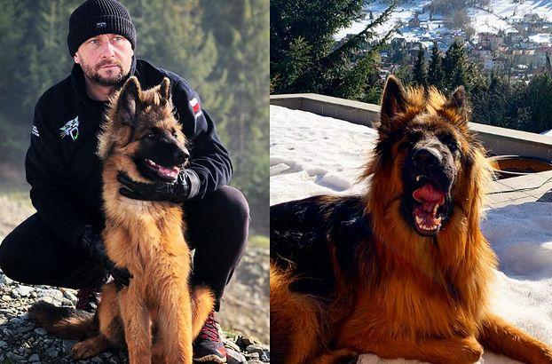 TYLKO NA PUDELKU: W samochodzie rozbitym przez Kamila Durczoka był jego pies! TRAFIŁ DO SCHRONISKA