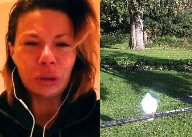 """Górniak nadal cierpi: """"Podleciał do mnie biały gołąb!"""""""