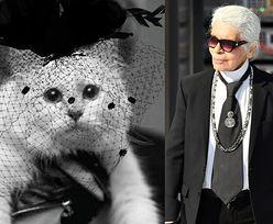 """Kotka Lagerfelda """"napisała list"""" do Karla... """"Niech pamięć o moim tatusiu na zawsze żyje w jego pracy"""""""