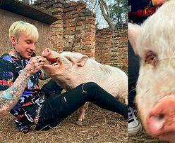 """Smolasty dokarmia świnię na Instagramie. Fani: """"Jedyna świnia, jaką udało ci się wyrwać"""""""