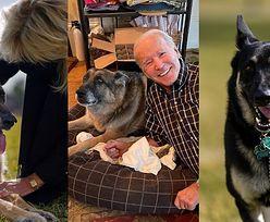 Psy Joe Bidena przeprowadziły się do Białego Domu! (ZDJĘCIA)