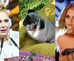 """Katarzyna Nosowska czyta swojemu psu wpis Kaczorowskiej. """"Gdy podnosisz mordę, to jesteś zadufany"""""""
