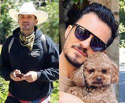 Zdruzgotany Orlando Bloom szuka zaginionego psa. Wynajął czworonożnego detektywa... (FOTO)