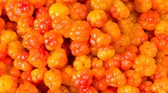 Fińskie owoce leśne – właściwości
