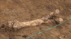 Szczątki Homo georgicus sprzed 1,8 mln lat. Historyczne odkrycie w Gruzji