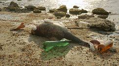 Zanieczyszczenie mórz i oceanów przyczyną śmierci delfinów i wielorybów