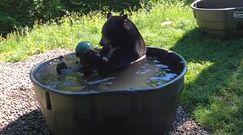 Niedźwiedzie spa. To nagranie z kąpieli w zoo stało się hitem sieci