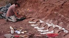 Skamieliny dinozaura z Argentyny. Przełomowe odkrycie naukowców