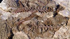 Odkryli szkielet lagerpetona. Zaskakujące wyniki badań