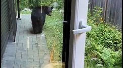 Niedźwiedź wszedł do domu. Kobieta miała dużo szczęścia