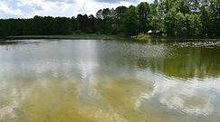 Groźne sinice w jeziorze Wigry. Popularne kąpielisko na Suwalszczyźnie zamknięte