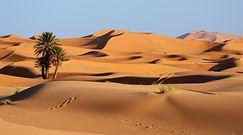 Sahara pełna ryb. Naukowcy przedstawiają wyniki nowych badań