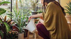 Jak prawidłowo podlewać rośliny? Wiele osób robi to źle
