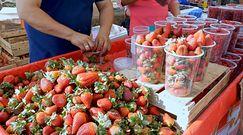 Najzdrowsze i najsmaczniejsze truskawki. Oto, co musisz wiedzieć przy ich wyborze
