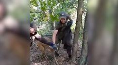 Leśnicy z Lubartowa uratowali przestraszone zwierzę