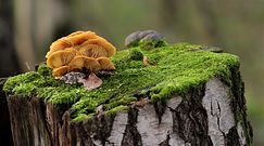 Supermoc grzybów. Od zagadek kryminalnych przez produkcję butów po lek na nowotwór