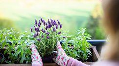 Proste sposoby na rozmnażanie roślin. Ważny jest nie tylko termin