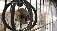 Kaplica św. Brygidy w Gdańsku. Odkryli kryptę z setkami czaszek