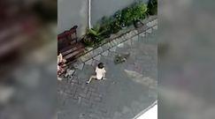 Małpa i próba porwania dziecka. Zaskakujące nagranie
