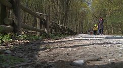 Parki i lasy już otwarte