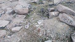 Starożytne cmentarzysko. Topniejący lód Antarktydy odsłonił coś przerażającego