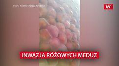Inwazja różowych meduz. Przejęły plaże i wody przybrzeżne