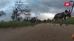Ciekawskie zwierzaki rodem z safari