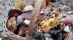 Jesienne zbiory ciekawych grzybów. Pokazał, co miał w koszyku