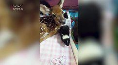 """""""Najsłodsze domowe zoo świata"""""""