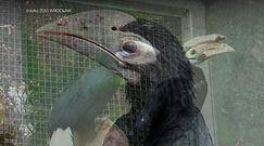 Niezwykłe narodziny we wrocławskim ZOO. Najrzadszy ptak na świecie