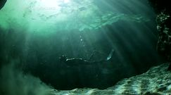 Niespodzianka pod powierzchnią bagna