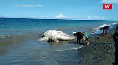 Tajemnicza morska bestia straszy mieszkańców Filipin