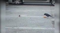 Kruk dzieli się jedzeniem z myszą