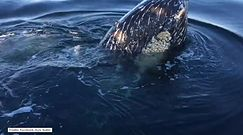 Wieloryby przyłączyły się do rodzinnej wycieczki łódką