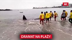 Dramat na plaży