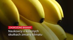 Banany mogą na stałe zniknąć ze sklepowych półek