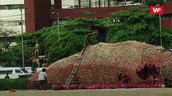 Wieloryb gigant. Ludzie robią sobie z nim zdjęcia
