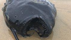 Morskie potwory. Najdziwniejsze stworzenia, które morze wyrzuciło na brzeg