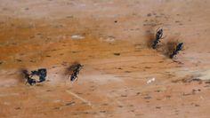 Sposoby na mrówki. Jak wytępić je z domu lub ogrodu?